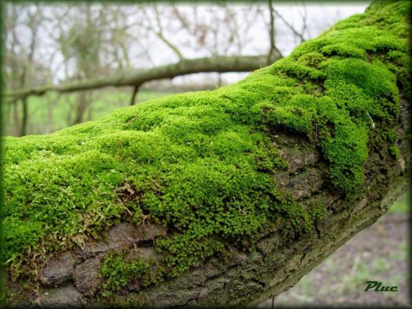 arbre_moussu_1024