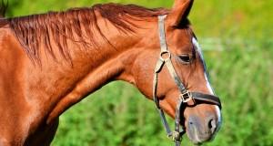 horse-2976323_960_720