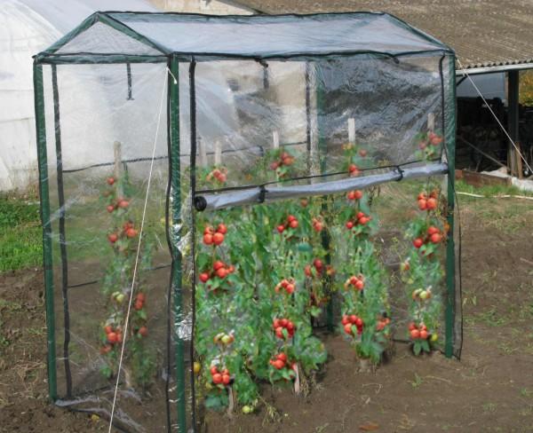 serre-a-tomates-_2_