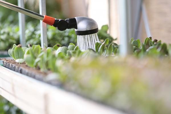 watering-520448_640